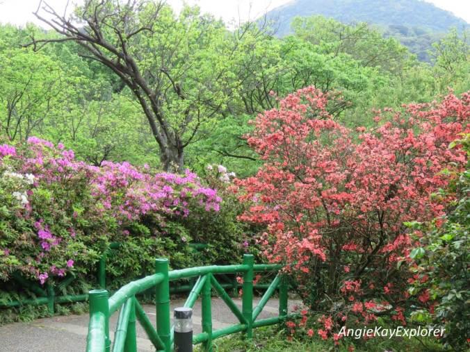 Taipei_Yangmingshan8